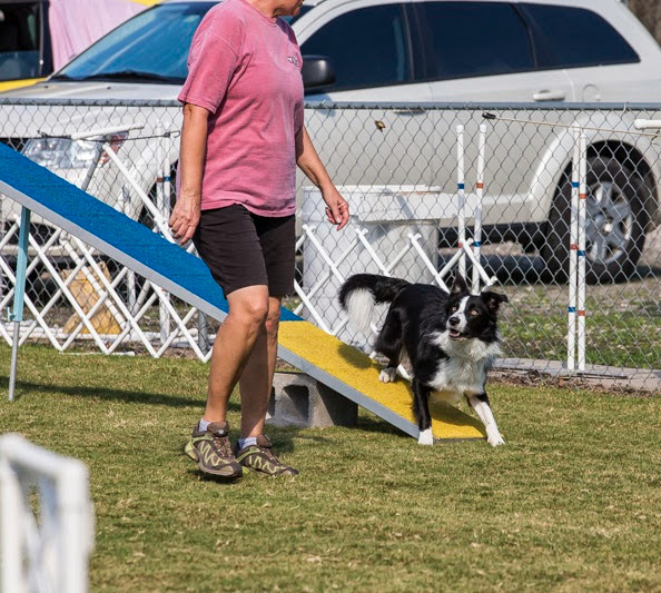 Rugby Dog Agility Show: Agility Competition